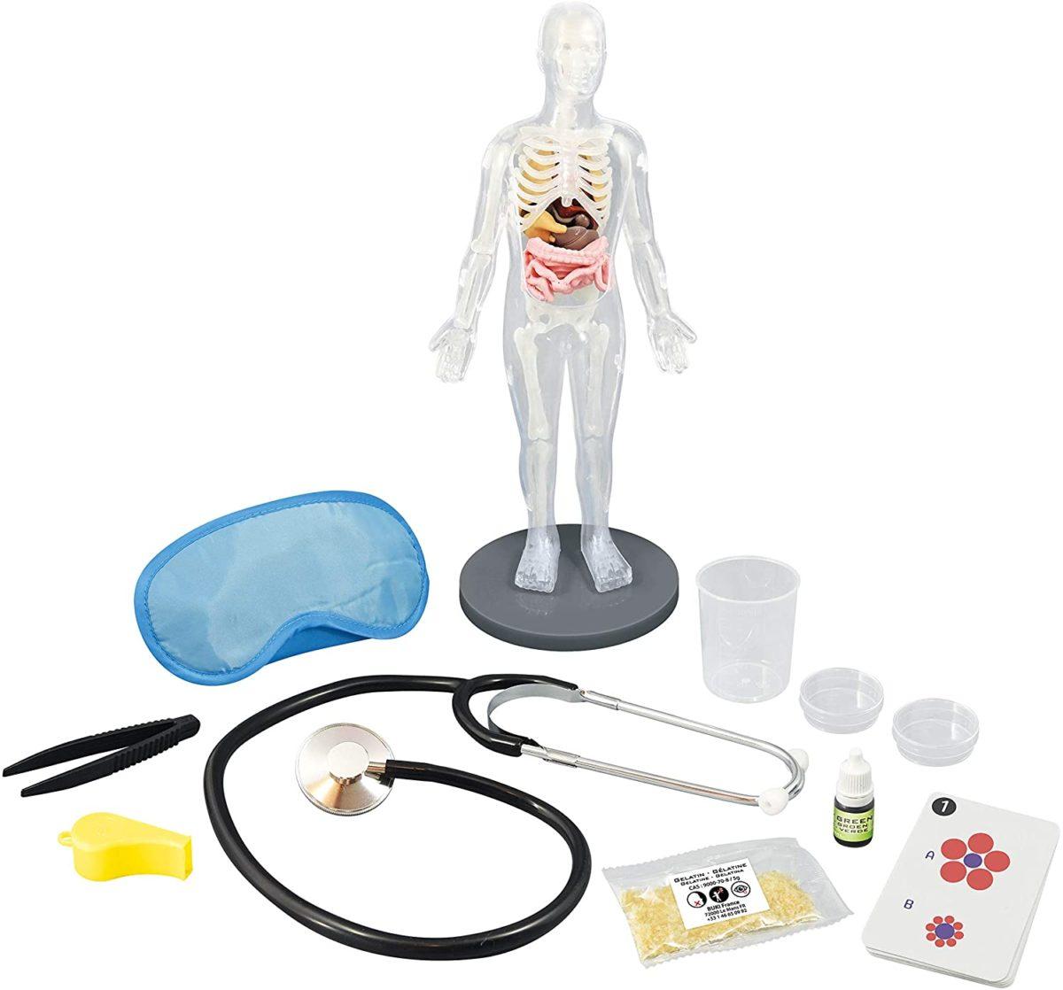 אנטומיית גוף האדם